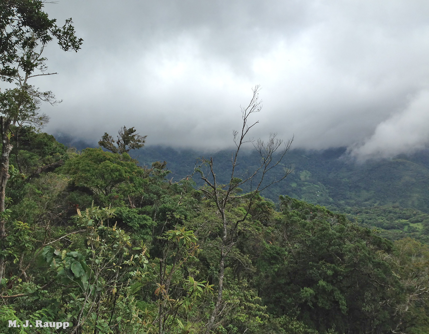 Moisture laden air from the lowlands condenses at higher elevations to form a cloud forest on a mountainside in Costa Rica. In a warming world what will be the fate of bio-rich cloud forests?
