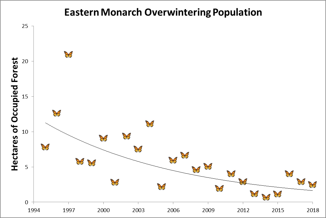 Dramatic decline in overwintering populations of monarchs in Mexico portends a gloomy fate for Eastern Monarchs unless this trend can be reversed. Image credit: Center for Biological Diversity