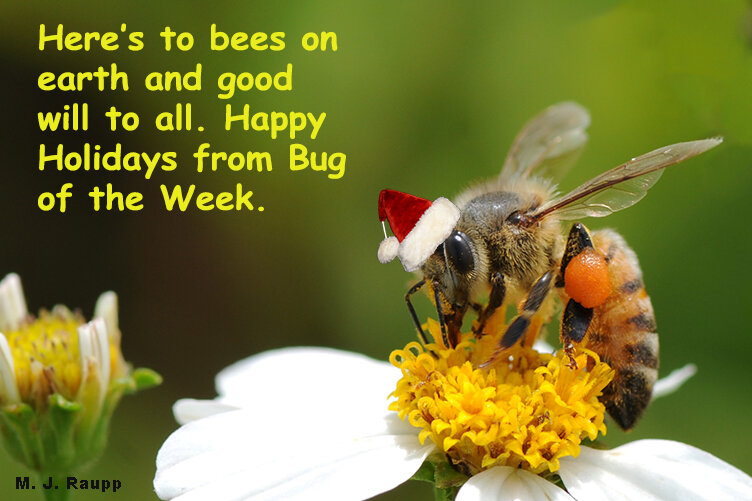 Bug of the Week wishes all of you a Happy Holiday and a joyous New Year.
