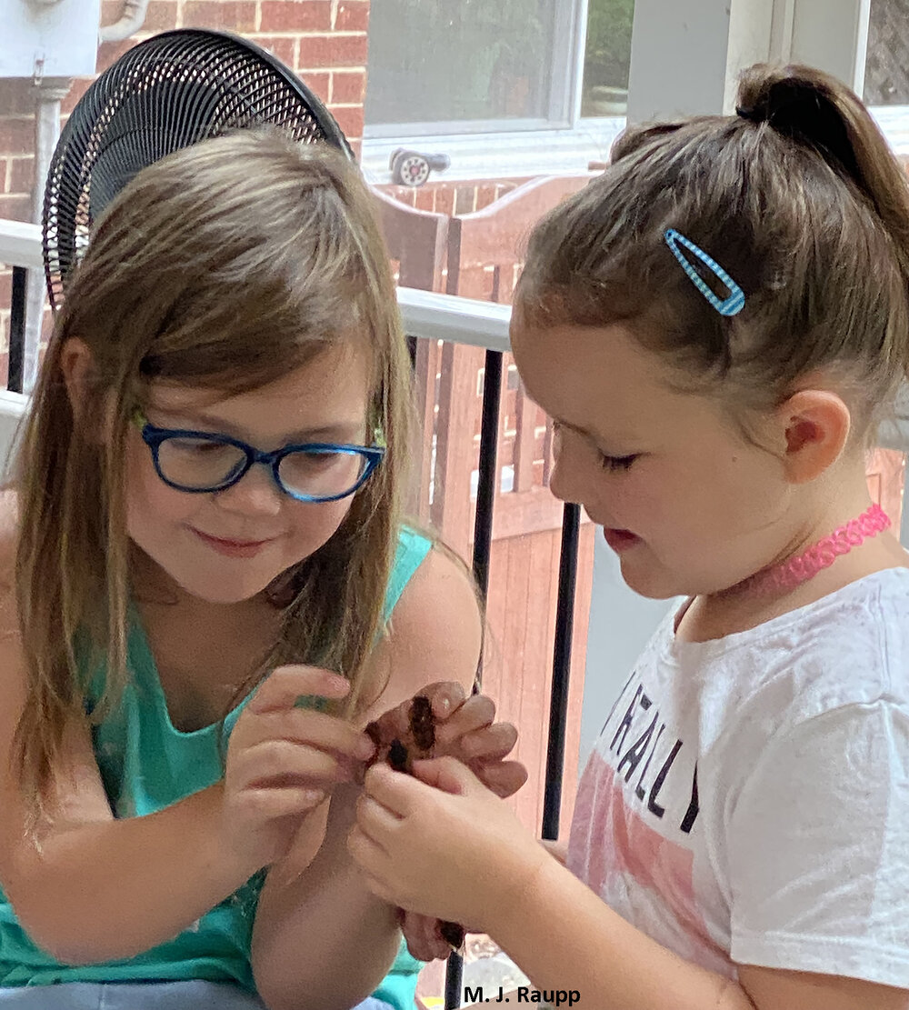 For millions of youngsters and not-so-youngsters, periodical cicadas are a source of fascination and fun, a chance to learn about the wonders of insects and the natural world.