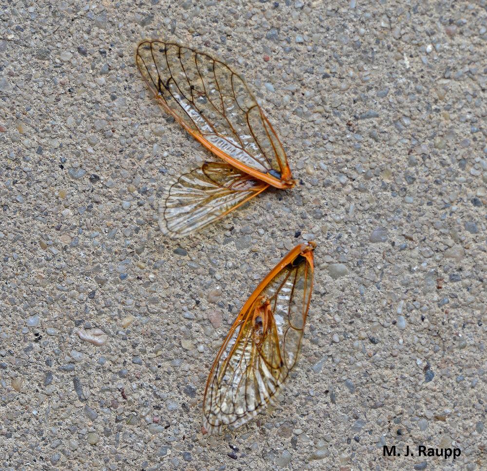wings1500.jpg