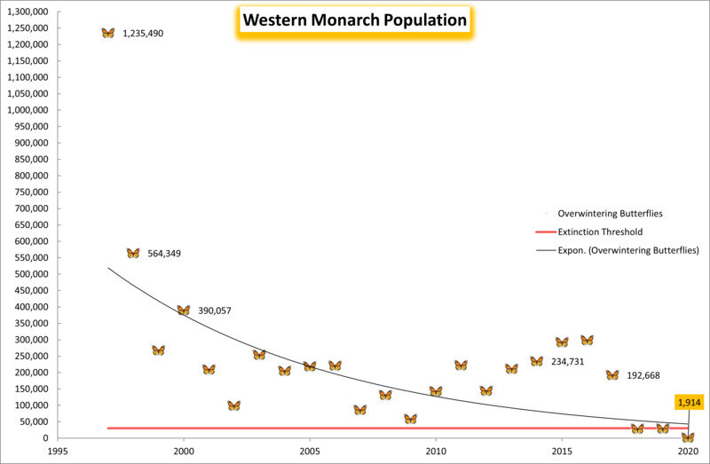 In the winter of 2020 2021, Western Monarch Populations dipped below the extinction threshold. Graph credit: Center for Biological Diversity.