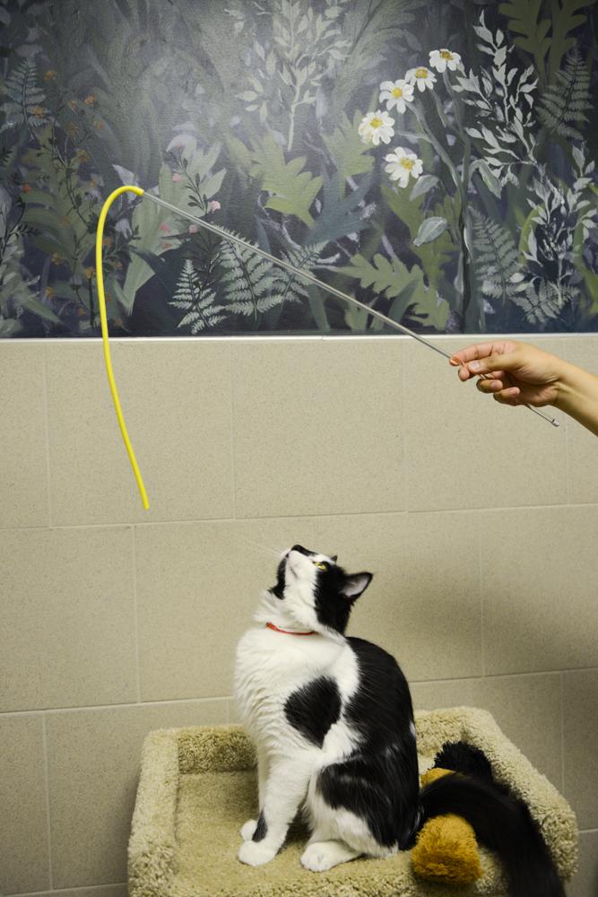 Louisiana Society for the Prevention of Cruelty to Animals (LA-SPCA)