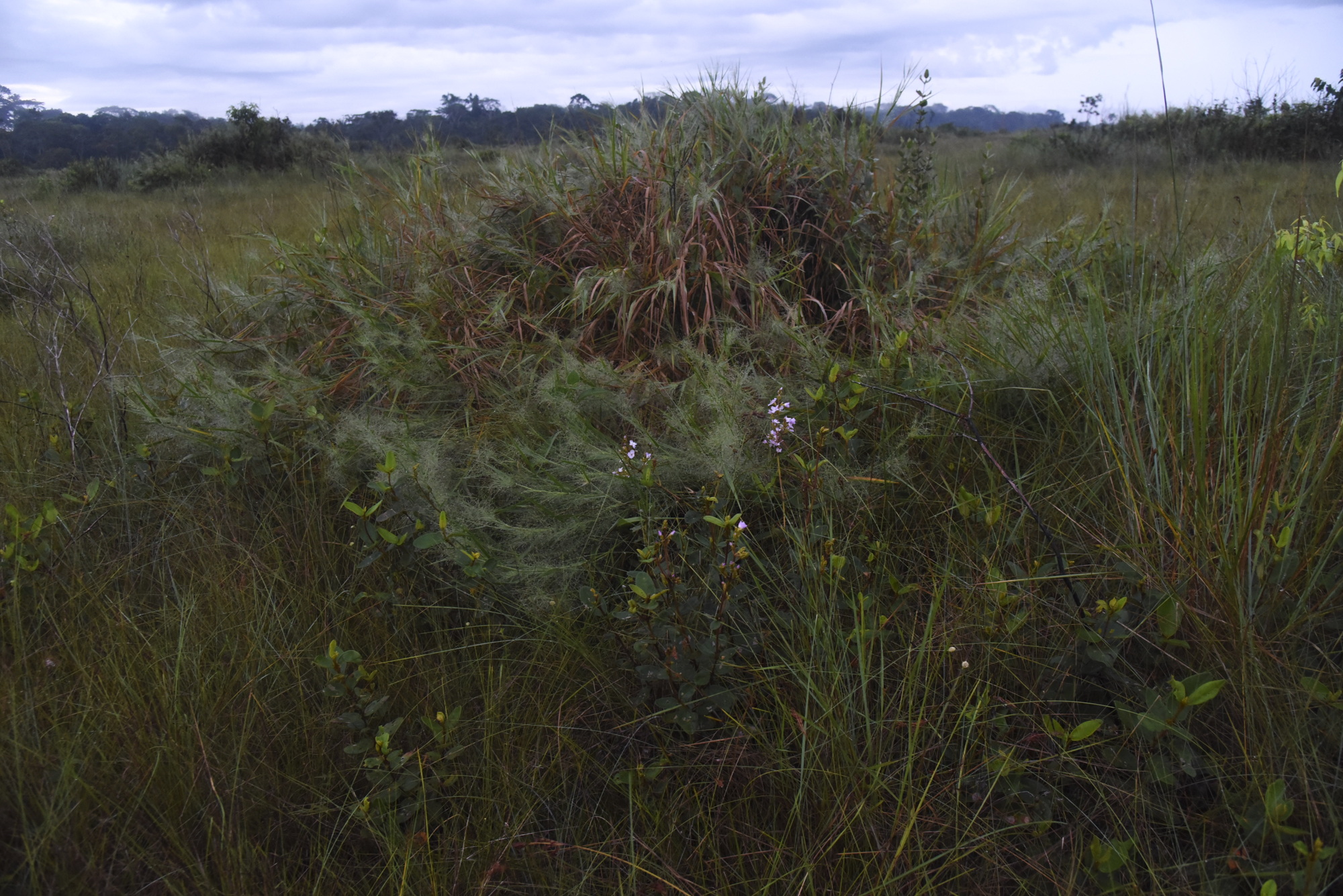 A variety of grasses and shrubs provide an ideal habitat for many birds in the Pampas de Heath.