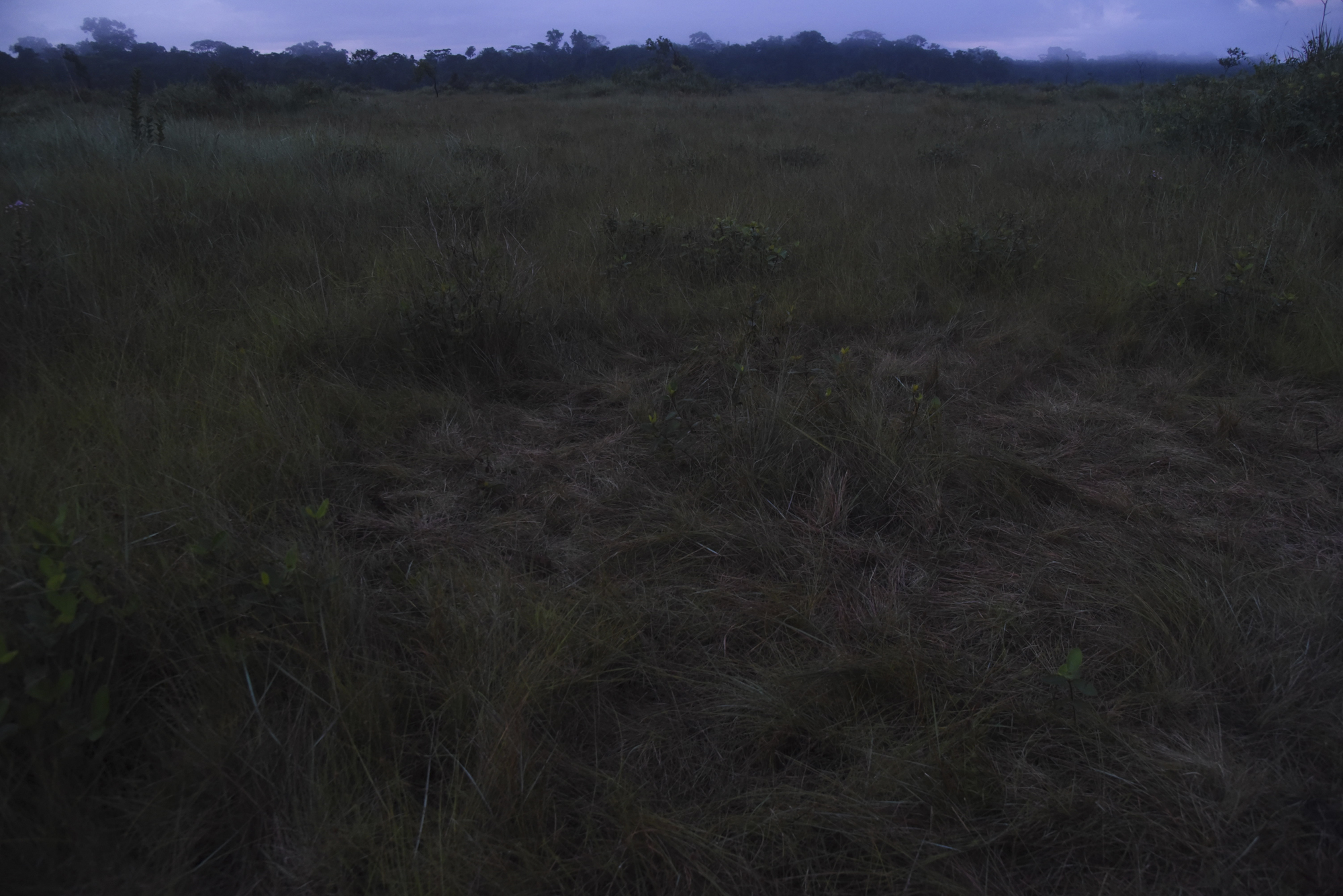 Pampas de Heath is considered a unique and isolated habitat in Peru and is home to a number of endemic bird, mammal and reptile species.