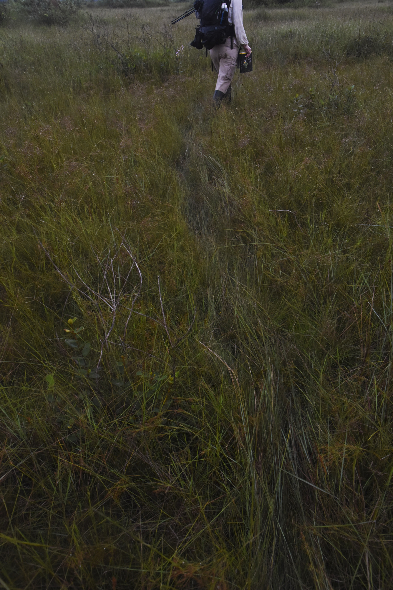 Heavy dew coats the grass on the Pampas de Heath savanna on the early morning hours of the 2019 Global Big Day.