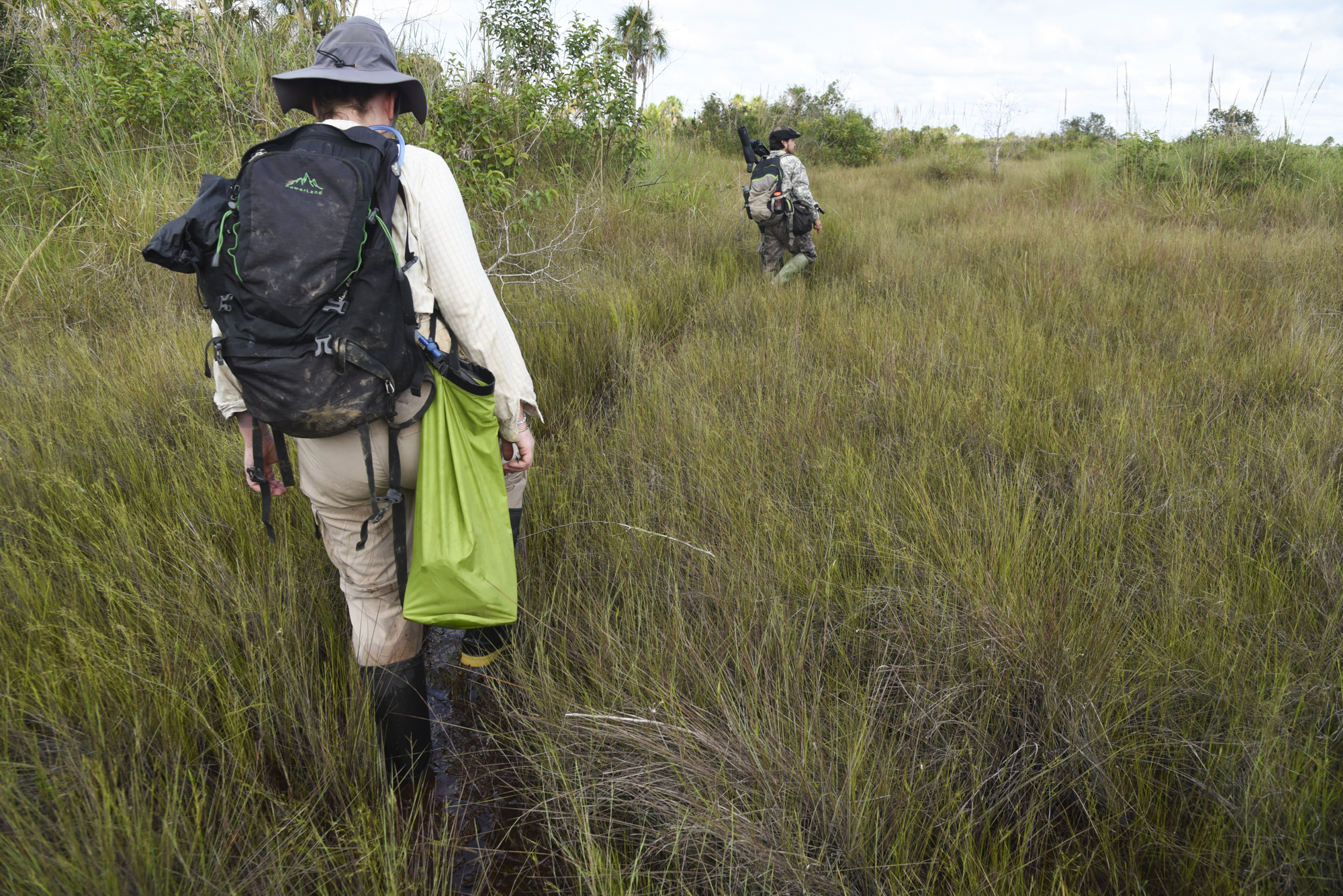 Maisie and Yohamir wade through flooded grass in search of White woodpecker ( Melanerpes candidus ) habitat. The White woodpecker is a favorite species to find by avid birders in the Pampas de Heath.