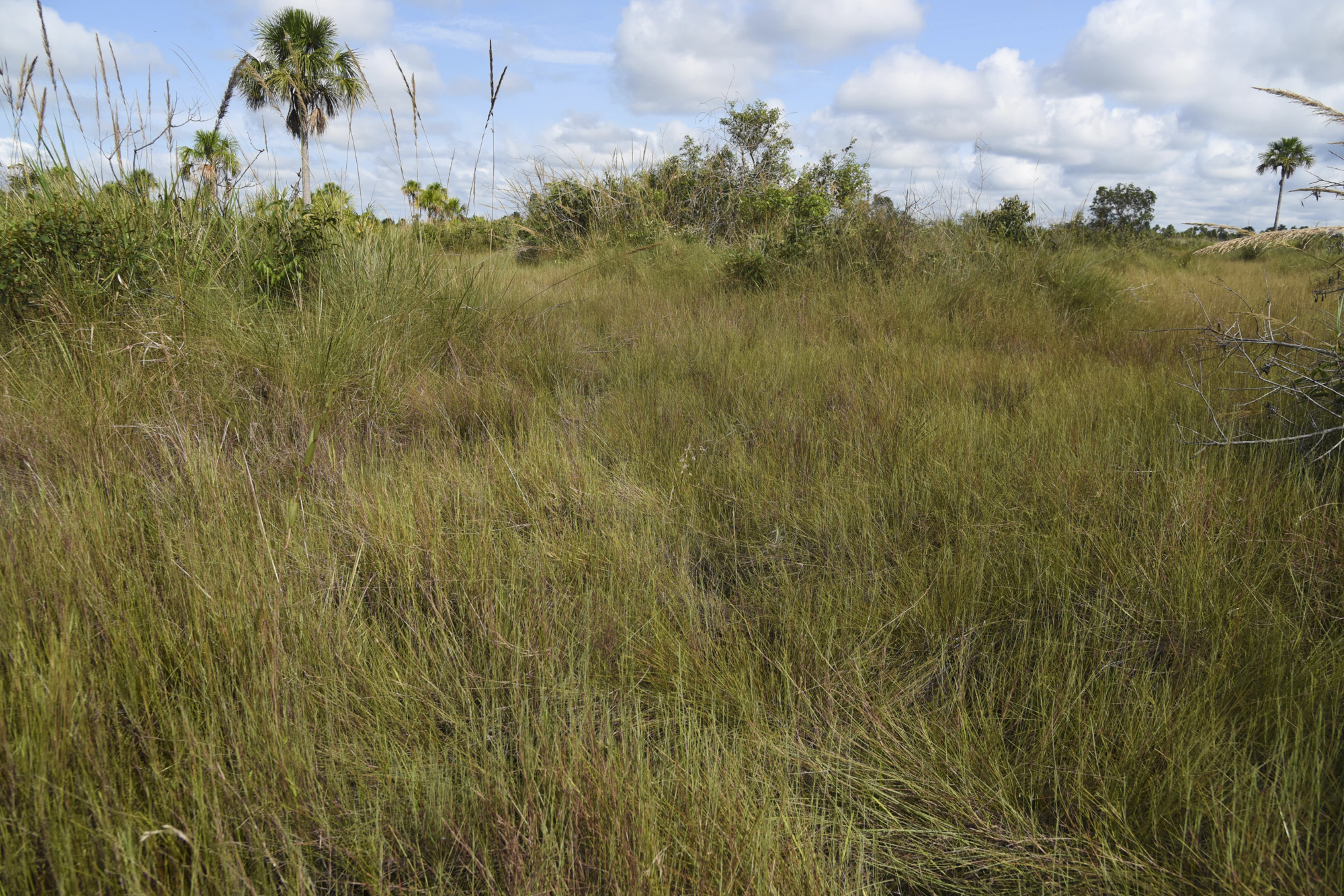 Pampas de Heath only occupies a small corner of the Peruvian Amazon basin, however, in Bolivia and Brazil it makes up a far greater land mass.