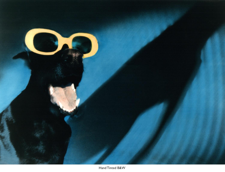 HC Dog in Sunglasses.jpg