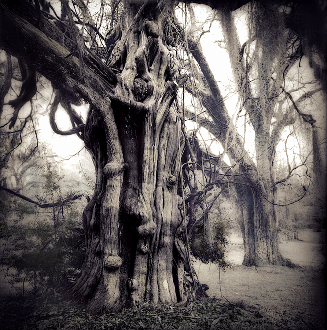 006_Aged Trees srgb-2.jpg
