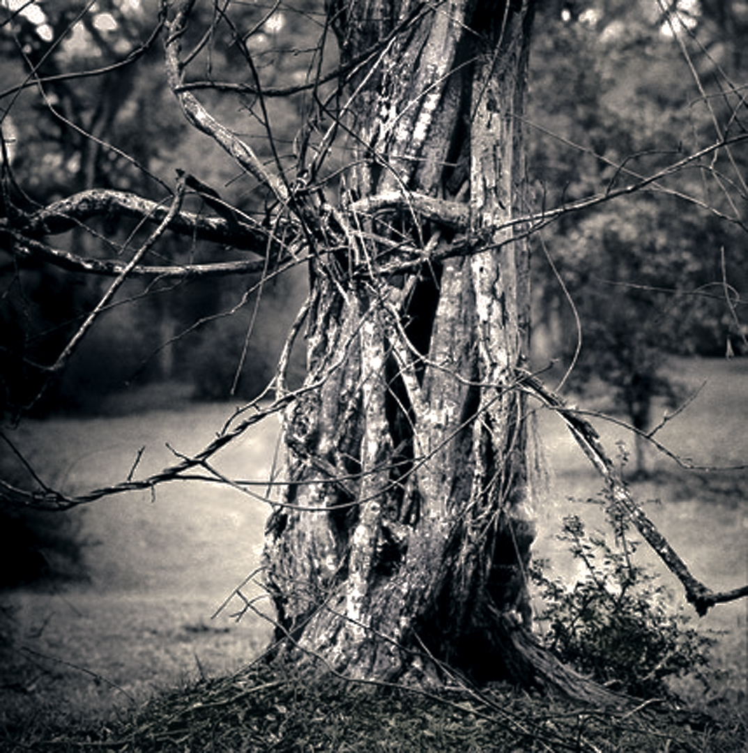 009_Tree Web srgb-Edit-2.jpg