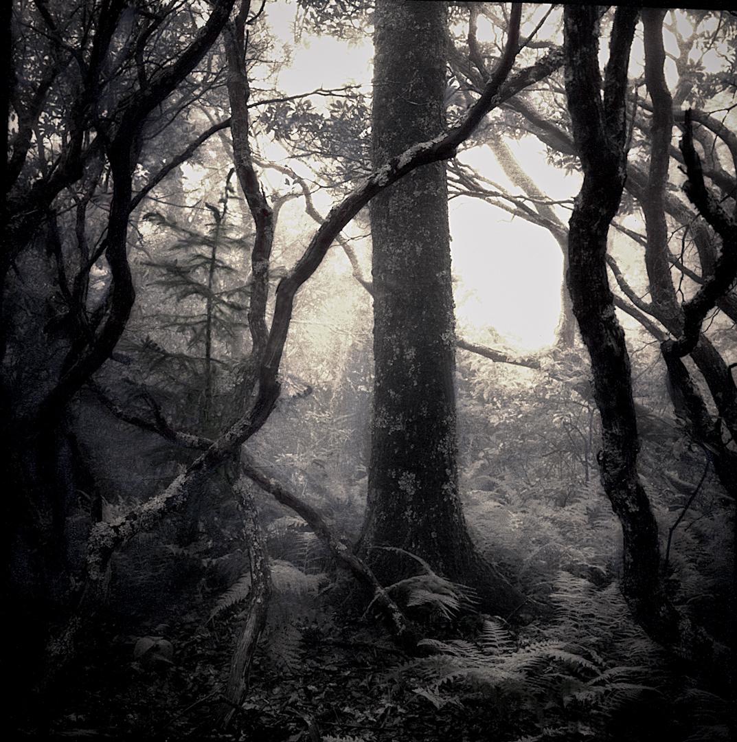 013_into_the_mist-7-2.jpg