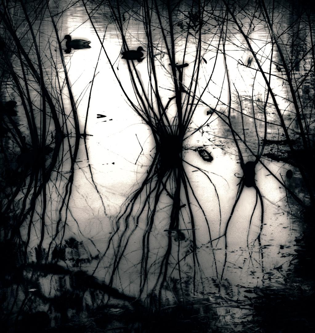 018_Swamp Ducks-2.jpg