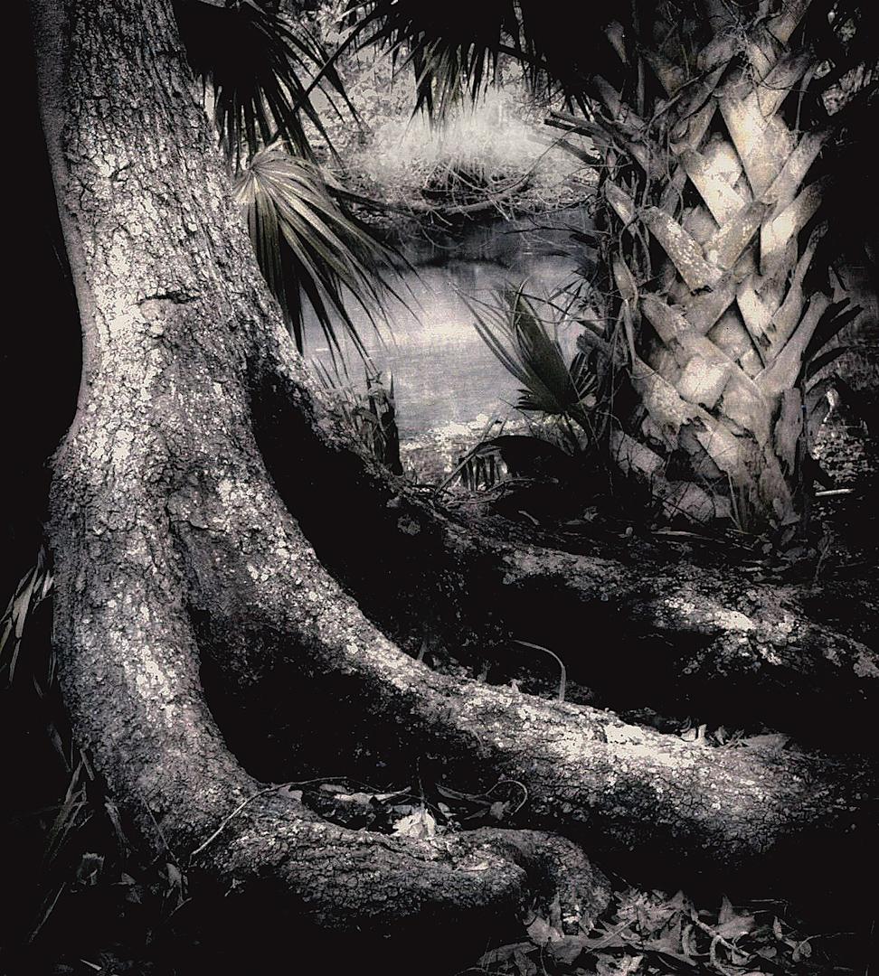 022_Prehistoric Roots-2.jpg