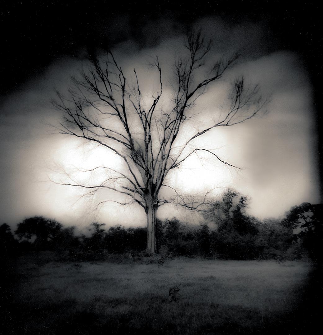 037_City Park Tree-2.jpg