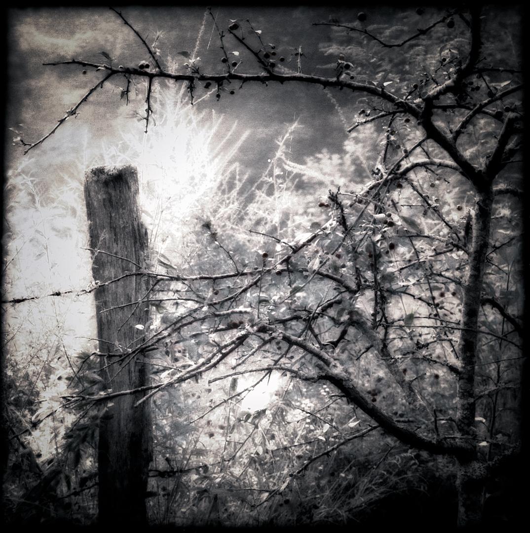 044_into_the_mist-80-2.jpg