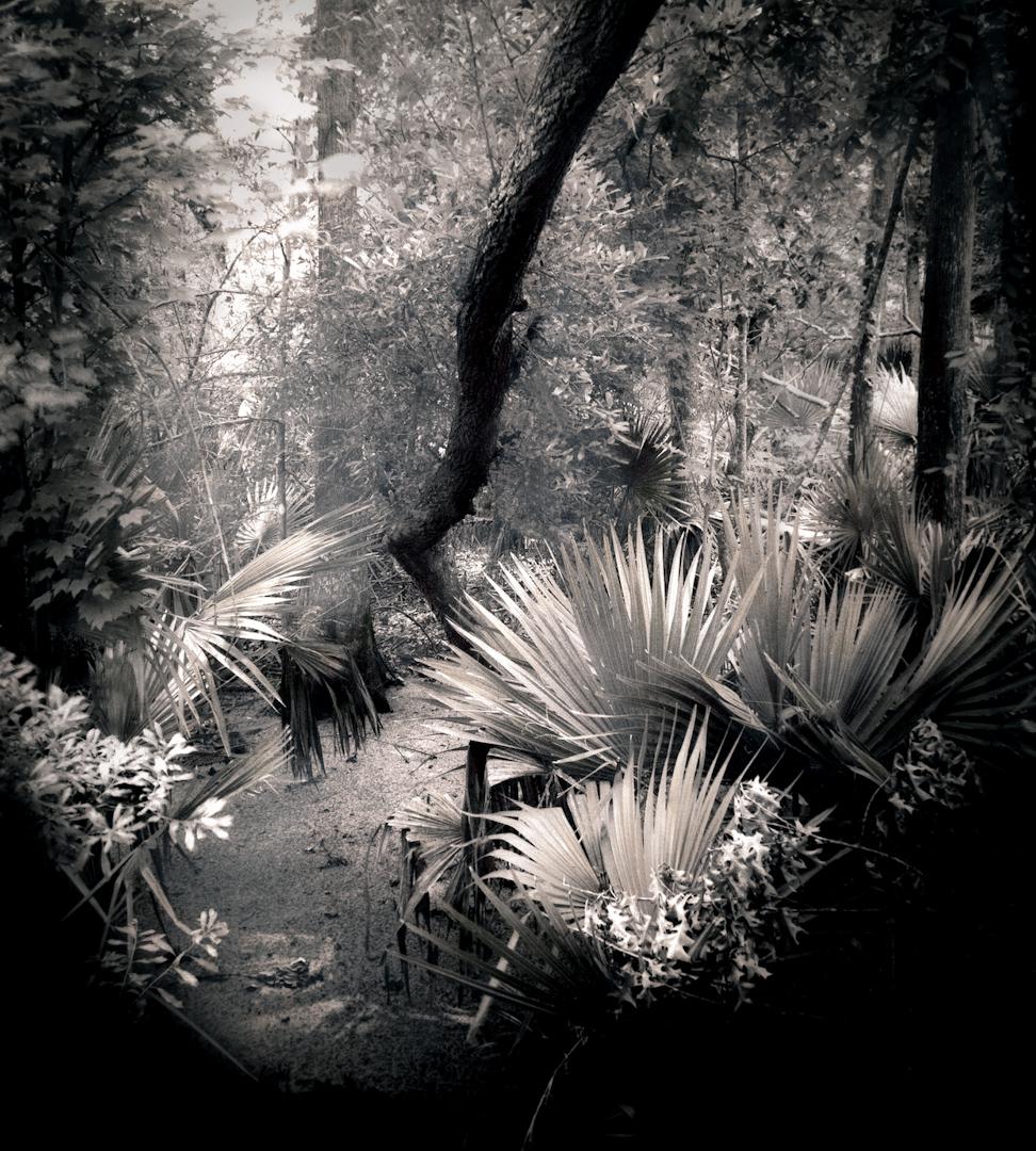 047_Palmetto Swamp-2-2.jpg