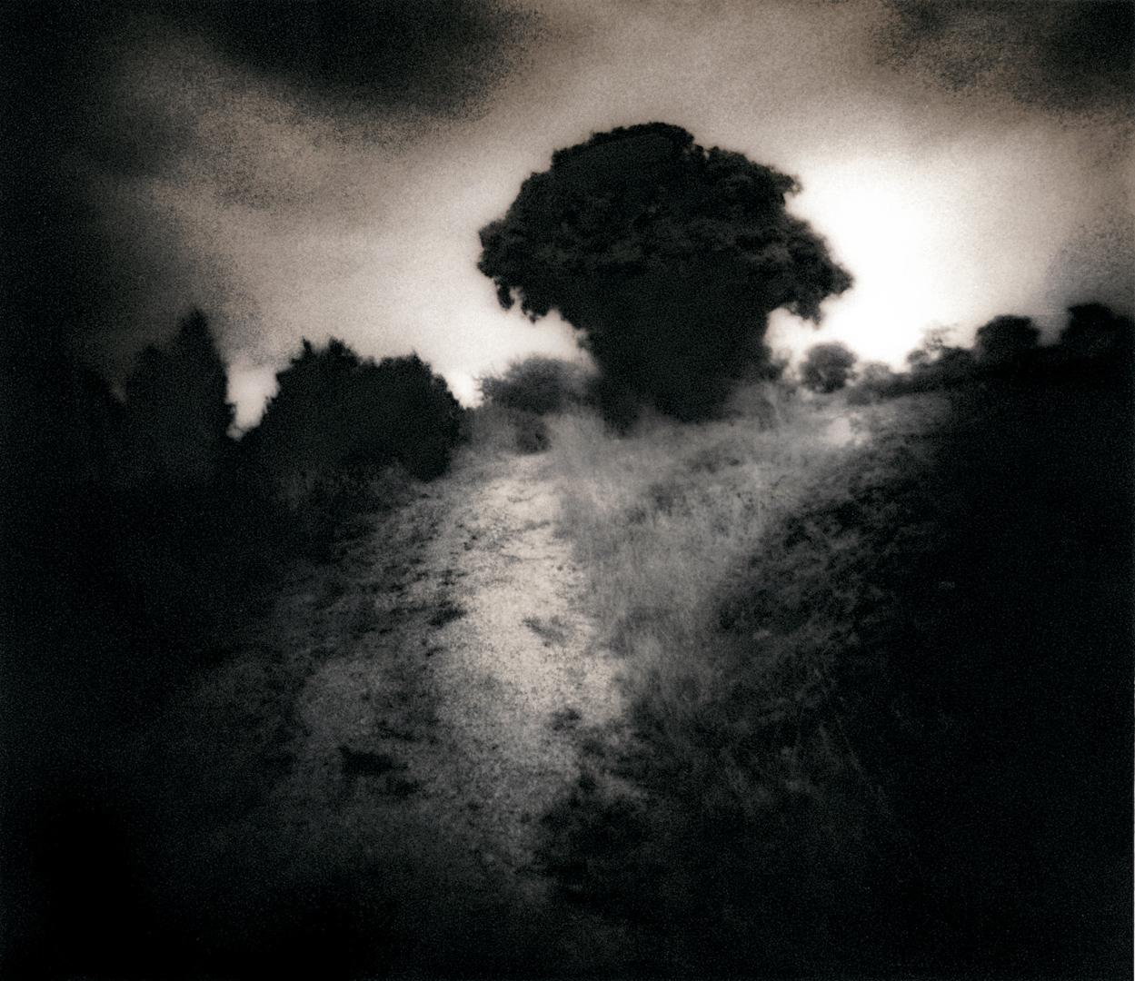 051_into_the_mist-1-1-3.jpg