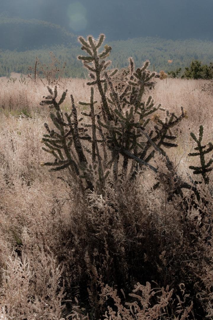 030_SantaFe_landscape.jpg
