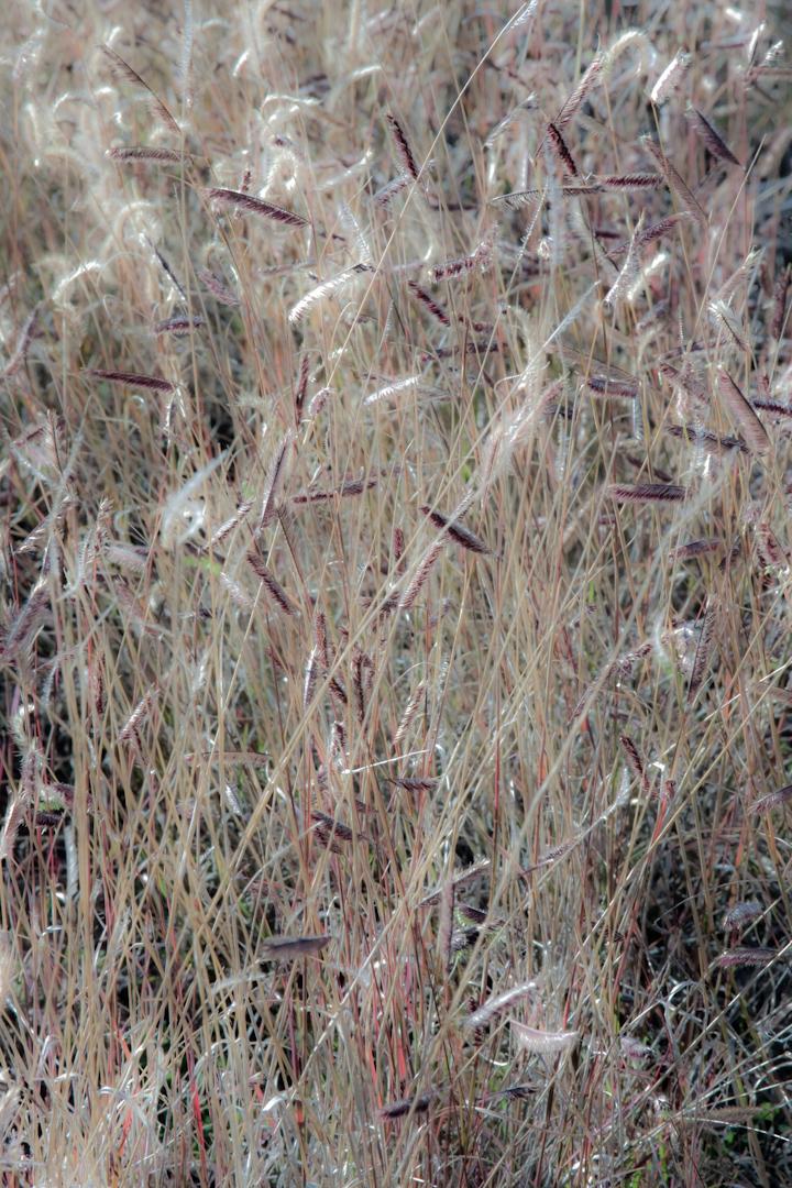 032_SantaFe_landscape.jpg
