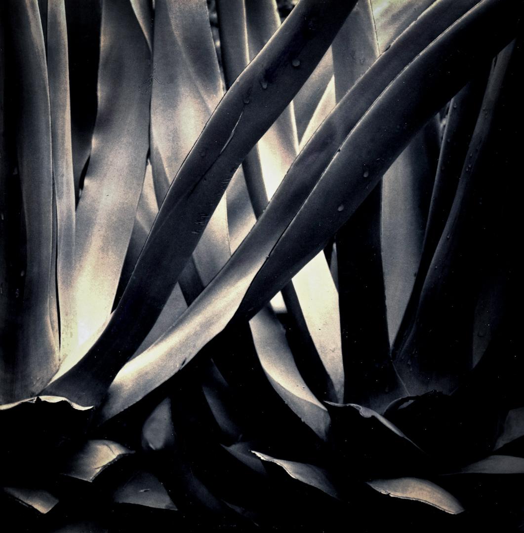 001_Cactus Tentacles copy.jpg