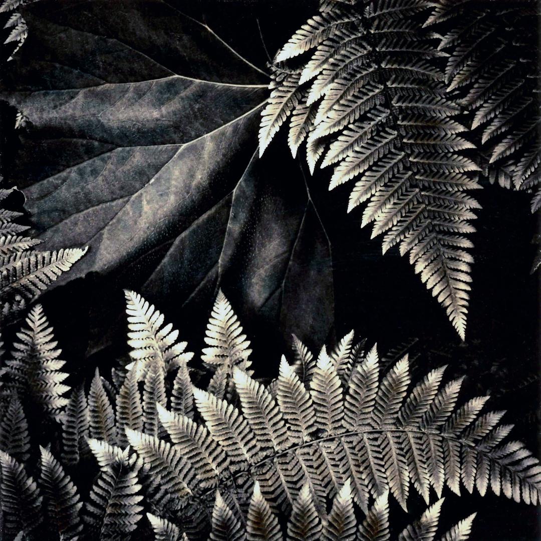 006_Hidden_Leaf_with_Ferns__srgb jpeg.jpg