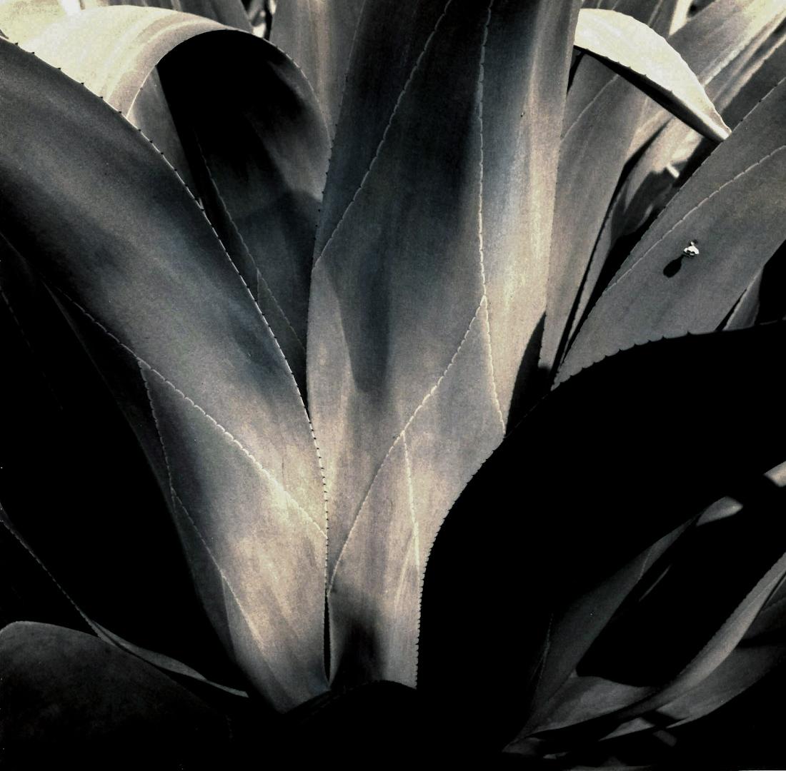 010_Classic Cactus copy 2.jpg