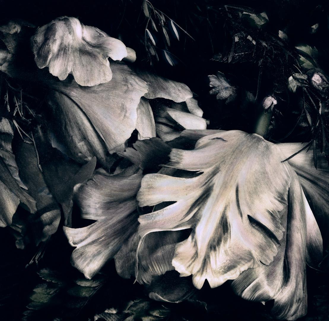 016_fancy tulips-2.jpg