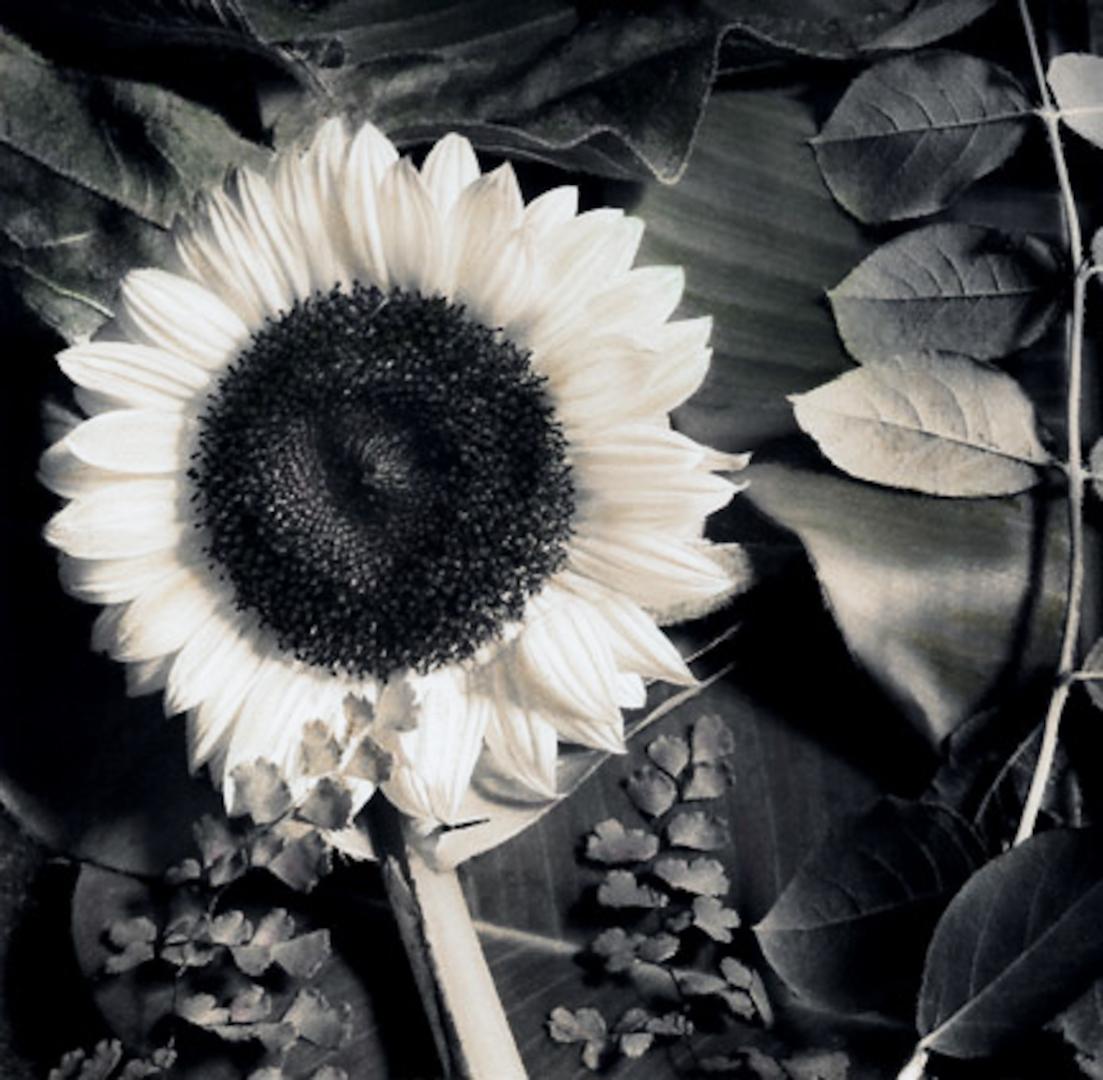 024_Sunflower srgb.jpg