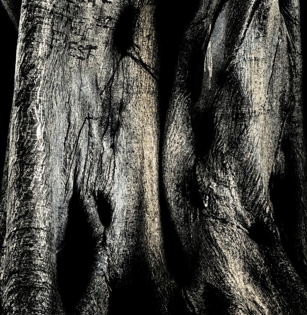 041_banyan tree couple.jpg