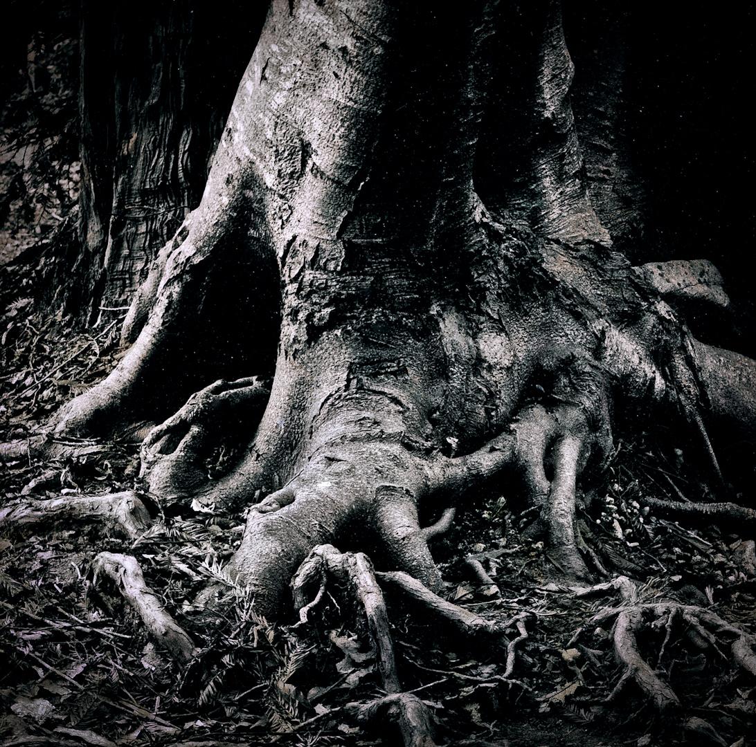 043_gnarly tree roots-2.jpg