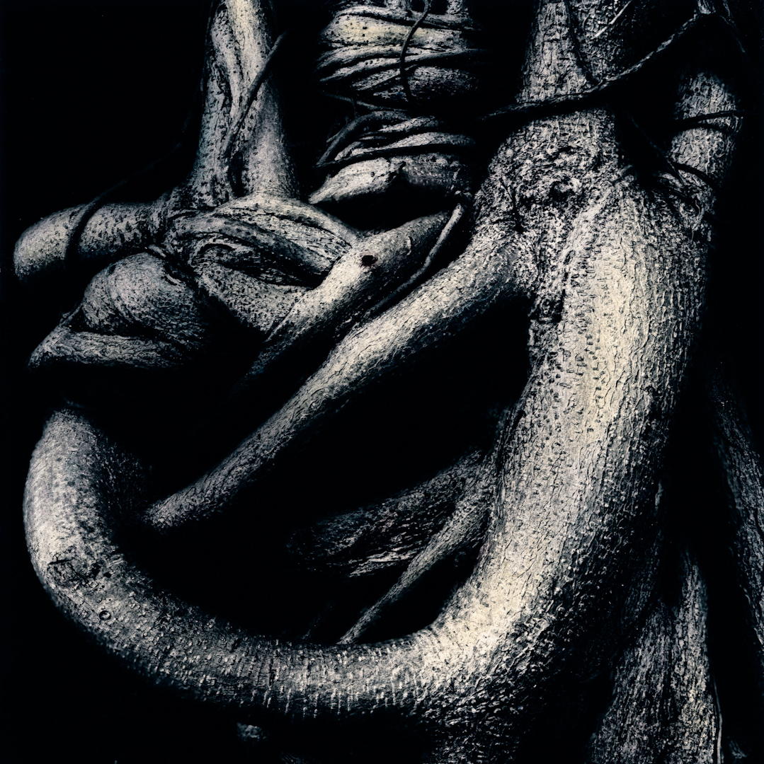 044_tree knot.jpg