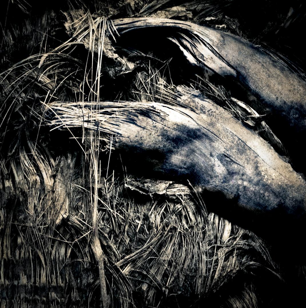 045_shredded palm textures.jpg