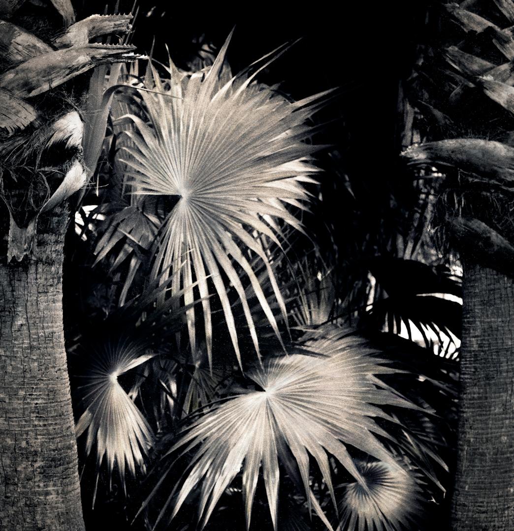 048_three palms.jpg