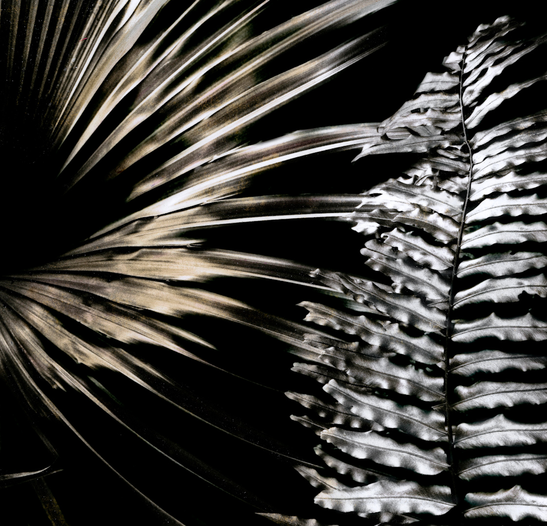 049_chinese palm fan.jpg