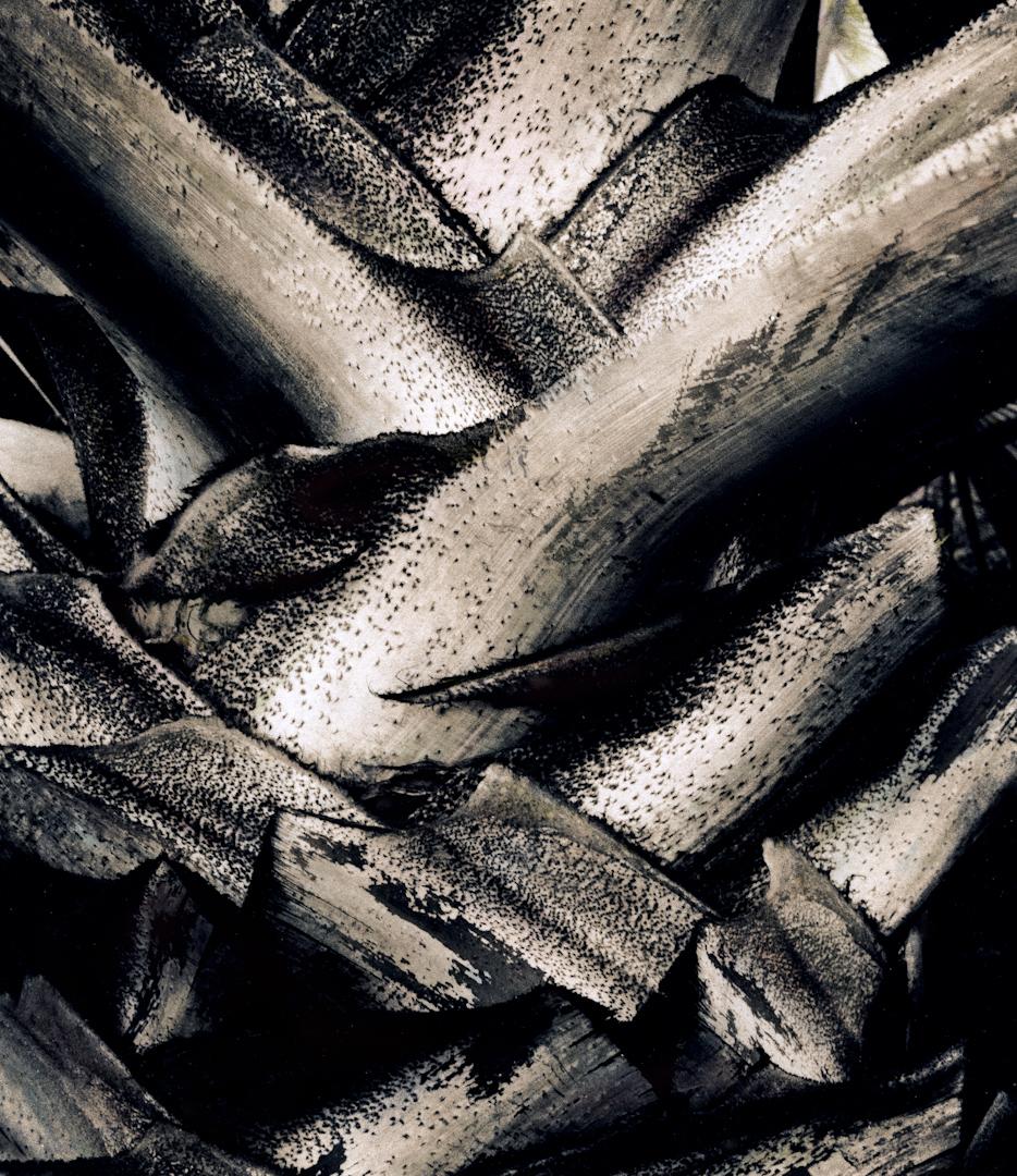 059_textured palm trunk-2.jpg