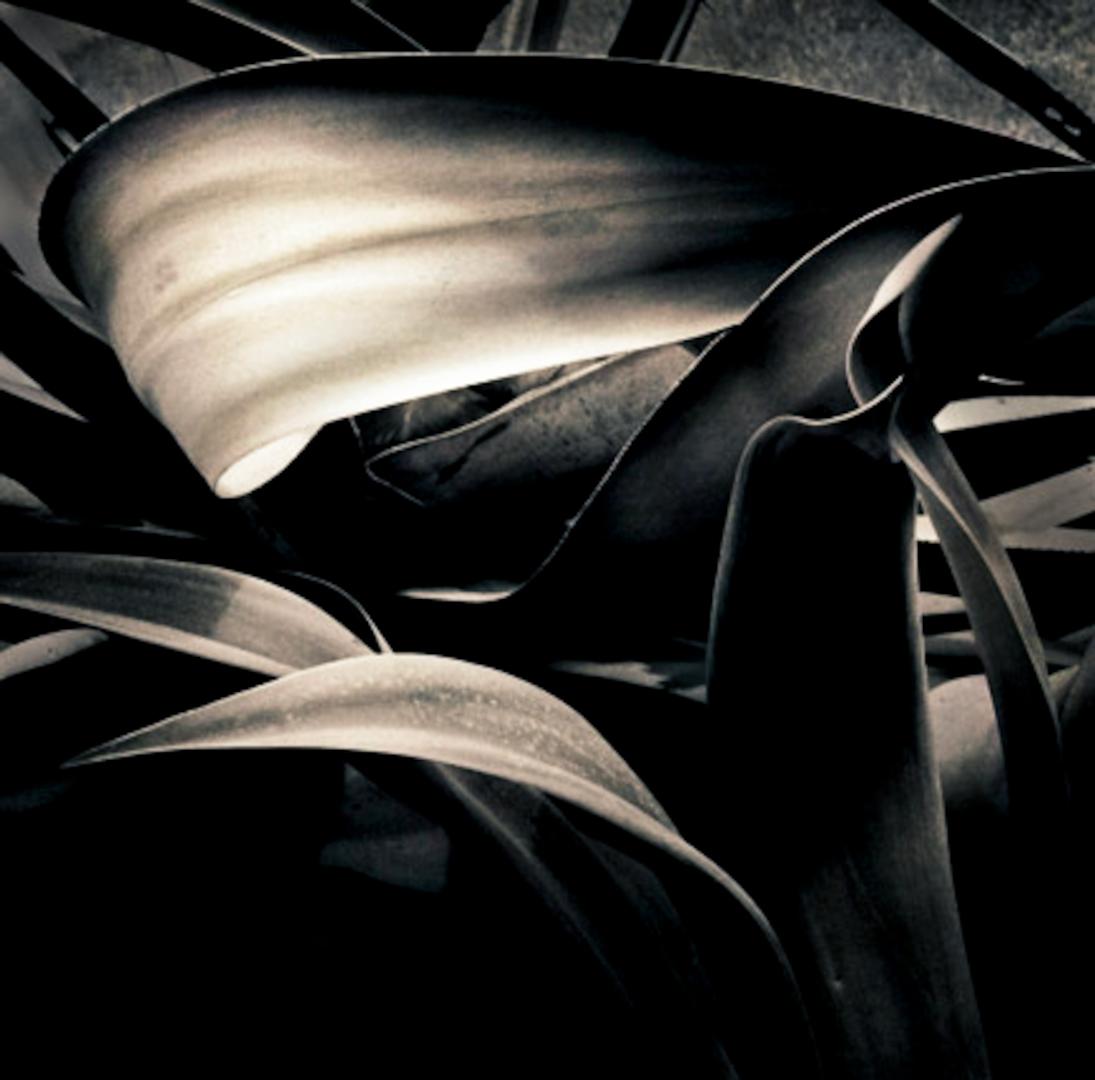 063_Twisted_Leaves_srgb.jpg