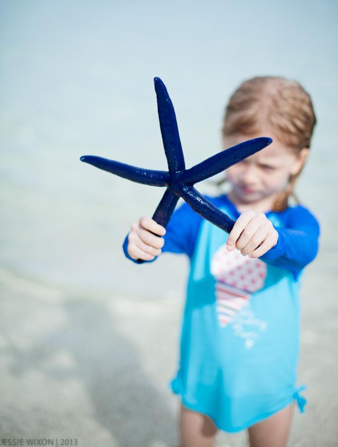89/365  Ever seen a blue starfish?