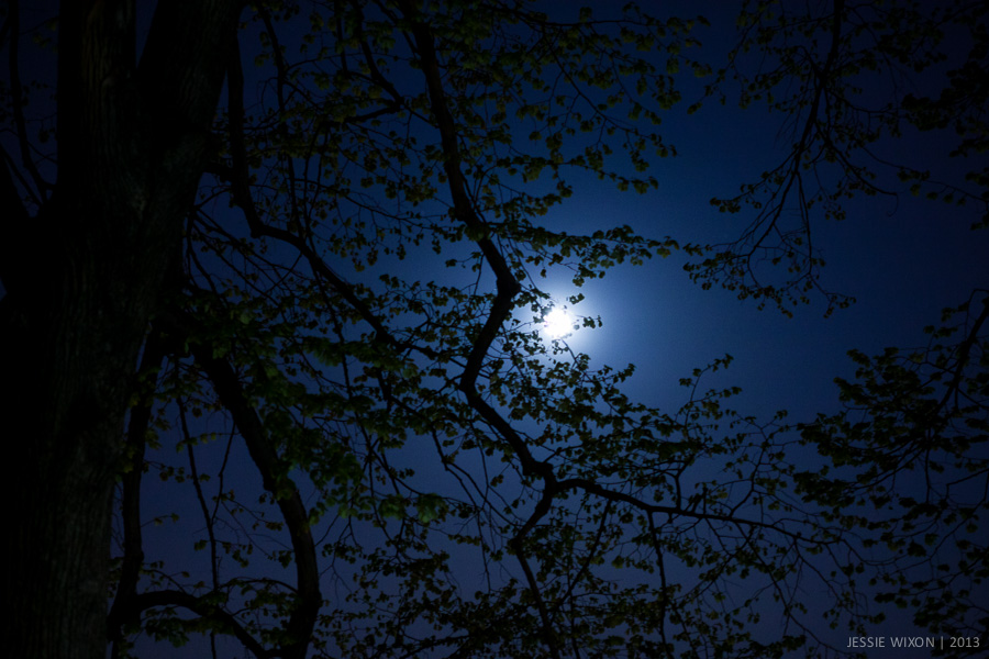 117/365  Full moon