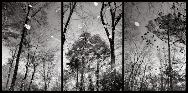 02-garden-triptych-jacksonweb.jpg
