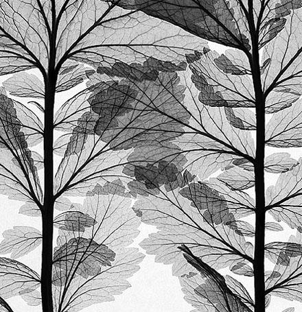 Leaf Pattern #4