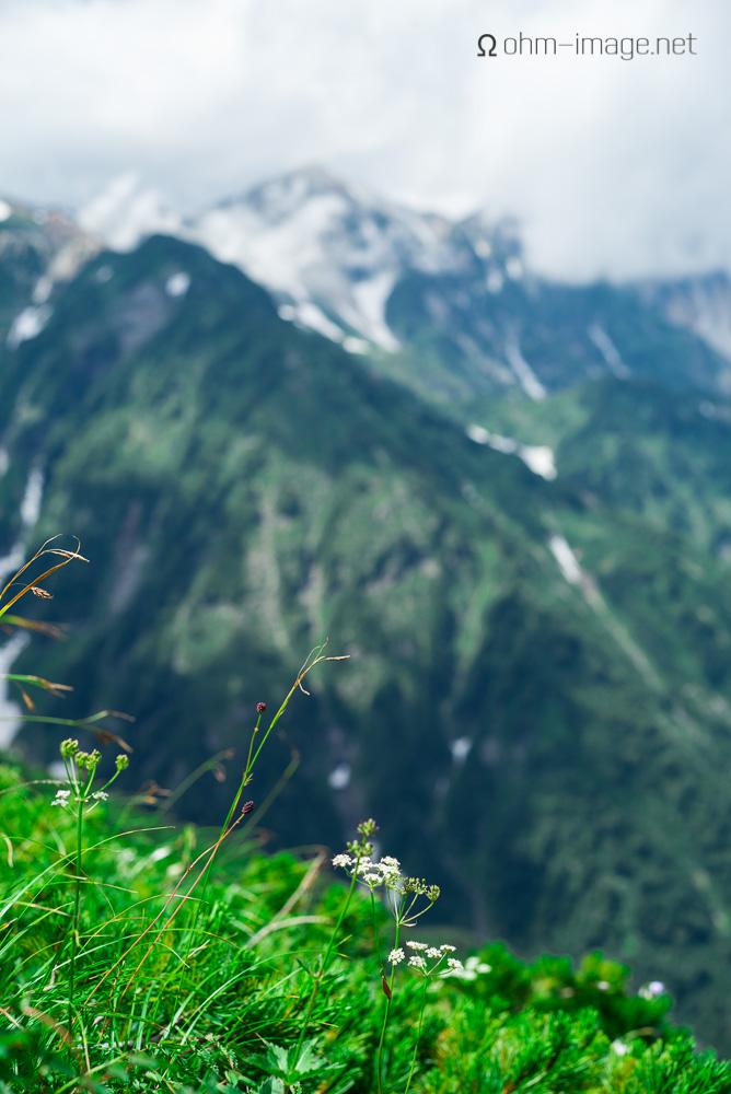 flowers - mountain slope.jpg