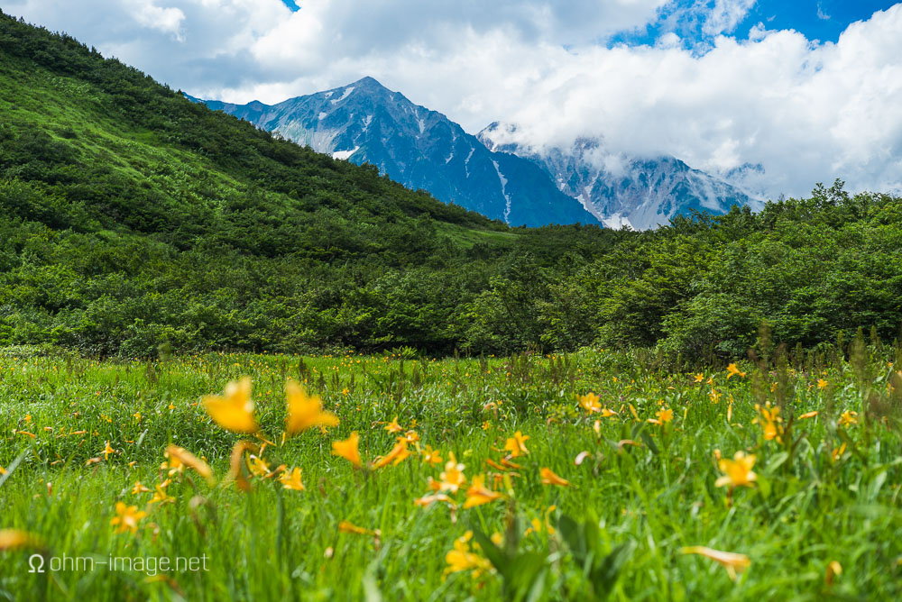 flowers - mountain lillies 2.jpg