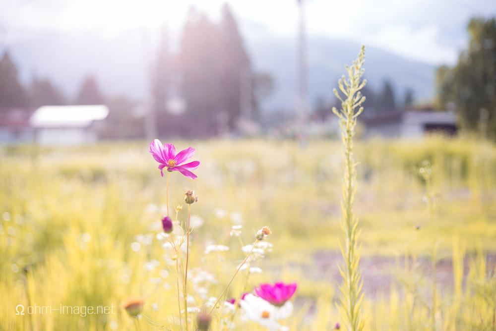 flowers - towering.jpg