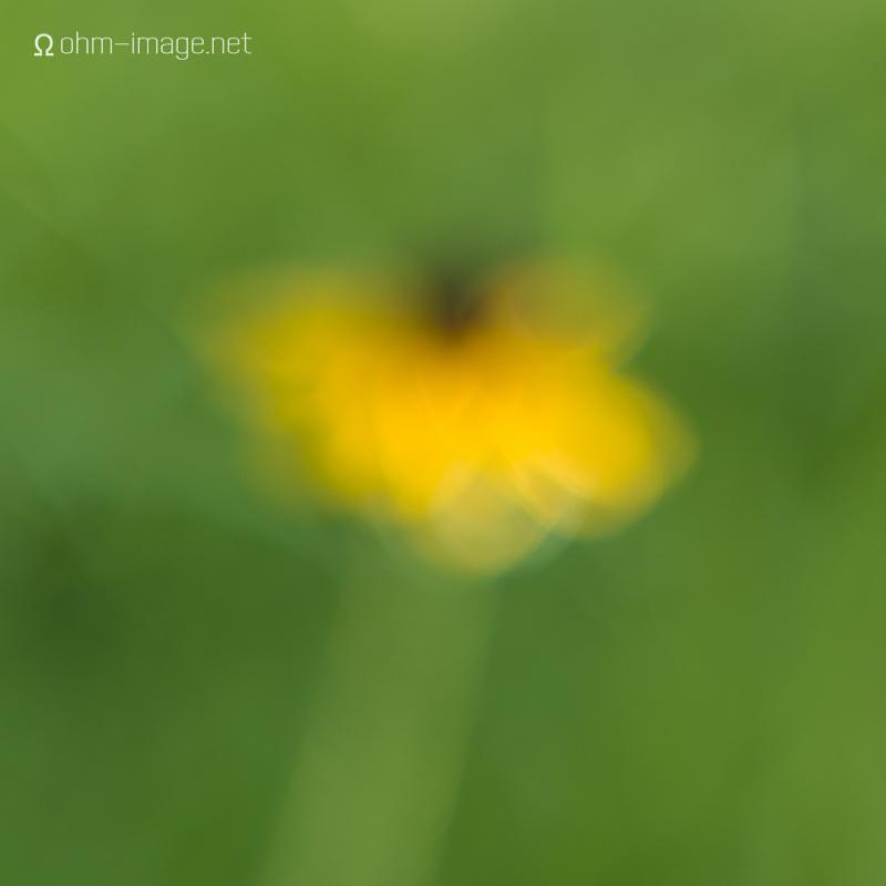 Thursday Scheimpflug - no tilt far.jpg