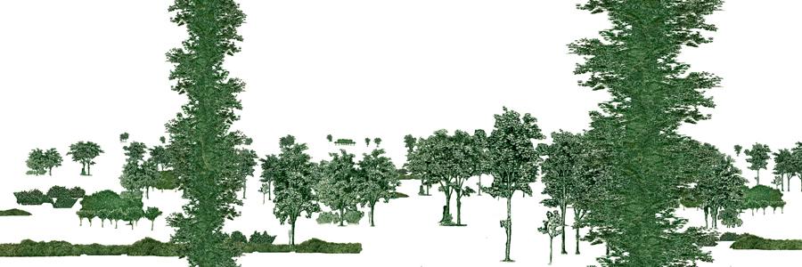foliagev2.jpg