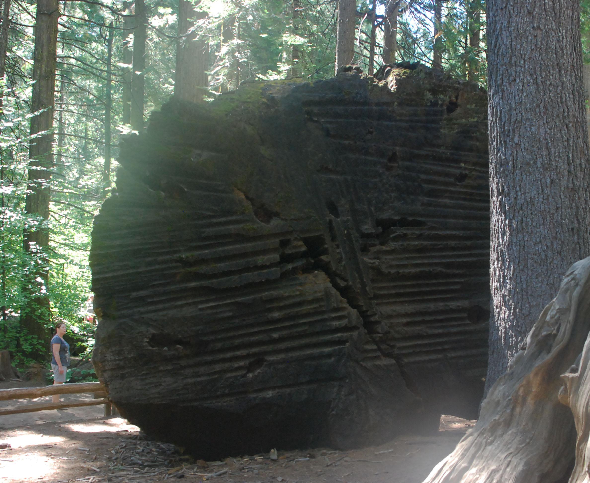 Sawed Discovery Tree.jpg