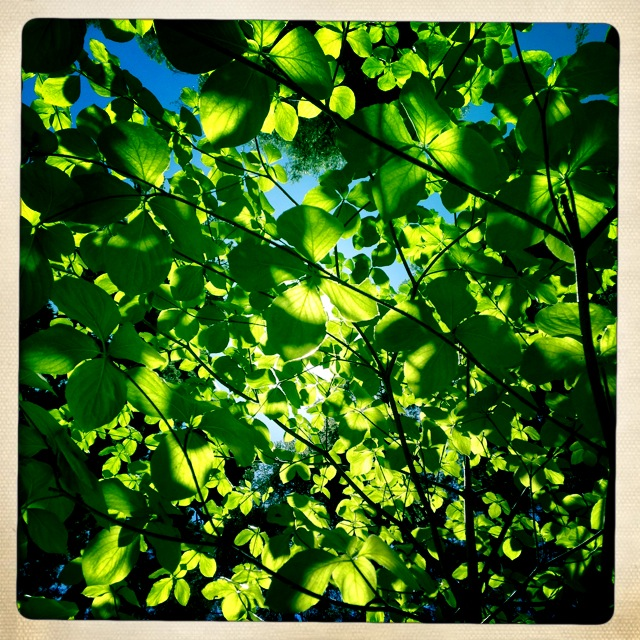 Light & Leaves.JPG