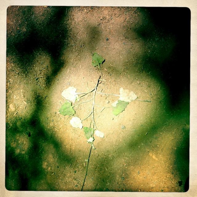 leaf still life.JPG