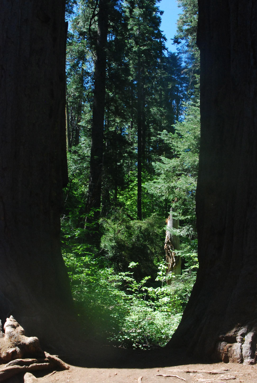Btwn the trees.jpg